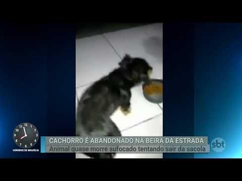 Cachorro é colocado dentro de saco plástico e abandonado em estrada | Primeiro Impacto (12/03/18)
