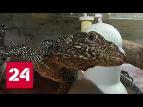 В Москве ужесточат правила содержания экзотических животных - Россия 24