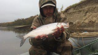 видео Нельма (Белорыбица). Каталог промысловых рыб Аква Продукт: Замороженные морепродукты оптом