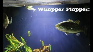 Pet Bass ATTACK Fishing Lures!!