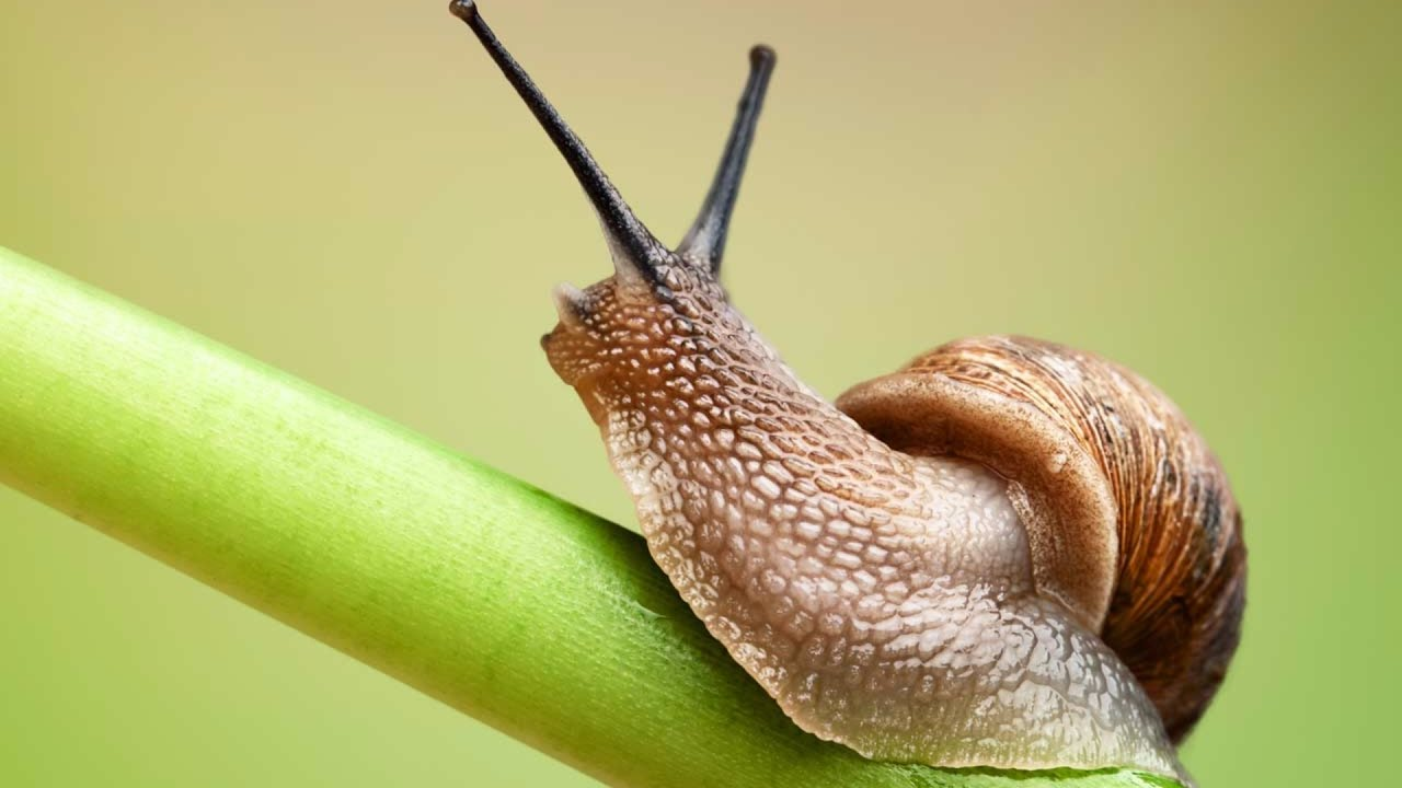 how long do snails sleep the truth youtube. Black Bedroom Furniture Sets. Home Design Ideas