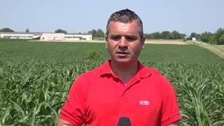 ДЮПОН РАСТИТЕЛНА ЗАЩИТА - Демо опит в царевица - три комбинации на хербициди