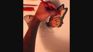 Butterflies Time Lapse Drawing