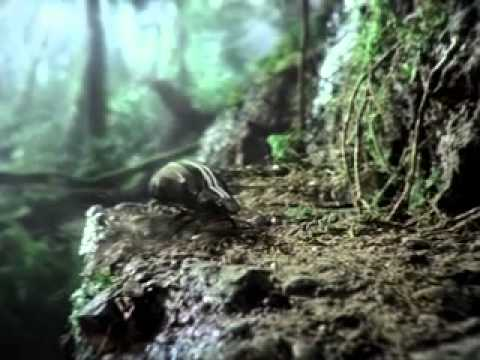 volkswagen beetle  super bowl xlv television commercial youtube