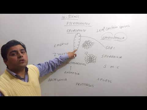 9th Science Biology Diversity In Living Organism Pteridophytes ,fern life cycle part 2