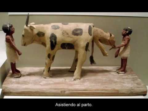 la-ciencia-veterinaria-en-el-antiguo-egipto.-(historia-de-egipto).