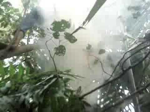 săn ong rừng  hunting wild bees