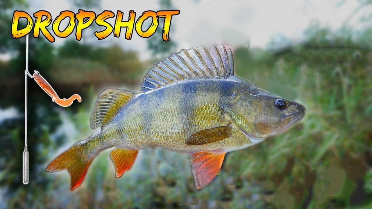 სპინინგით თევზაობის მონტაჟები  დროპ შოტი / ჩებურაშკა  дроп шот  drop shot