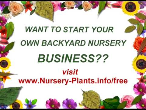 Starting A Backyard Nursery Business for Profit! - Starting A Backyard Nursery Business For Profit! - YouTube