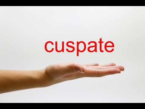 How to Pronounce cuspate - American English