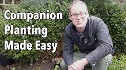 Companion Planting Made Easy