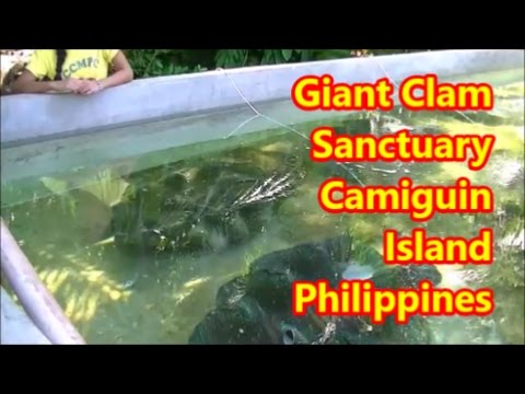 Giant Clam Sanctuary Camiguin Island Philippines Fun