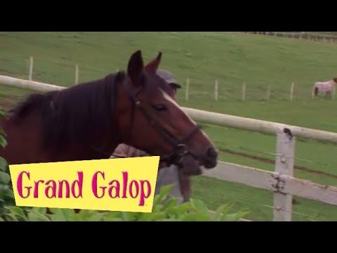 Grand Galop 121 - Un trait sur le passé | HD | Épisode Complet