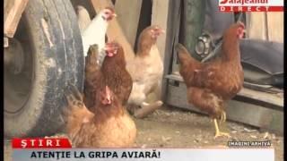 ATENTIE LA GRIPA AVIARA