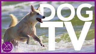 Dog TV: 12 Hours of Entertaining Dog Walks! (2021)