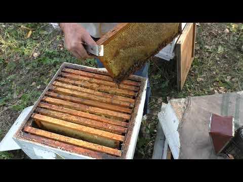Вопрос: Какие отзывы на статью Как пчелы воруют Стоит ли ее читать?