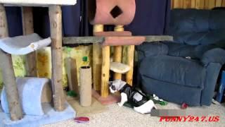 Funny cats dress - Смешные коты в одежде