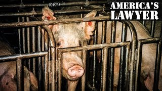 Factory Animal Farms Will Hate This Recent Court Ruling