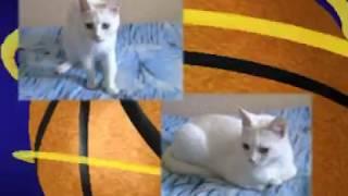 Любимая  белая кошка  Beloved white cat