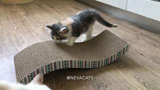 Kittens are sharpening their claws. /Котята точат когти