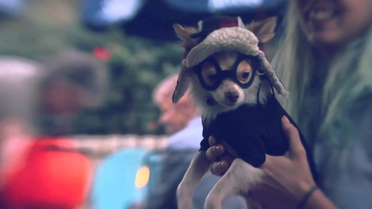 Chihuahua in a Hipster Boyfriend Costume | The Daily Puppy ...