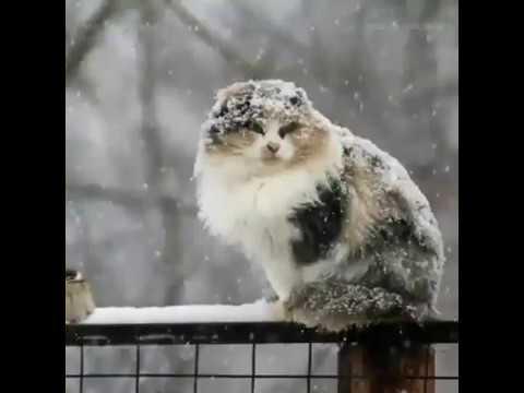 Первый снег!!! Началась настоящая зима