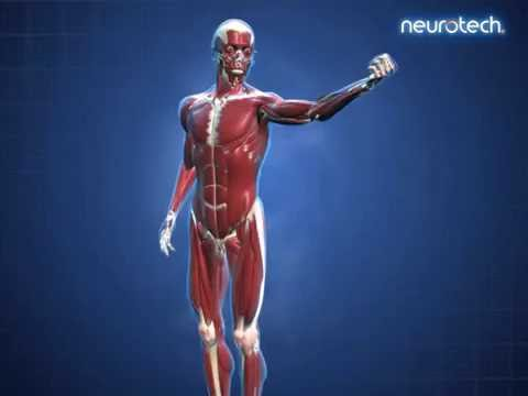 basics 8 musculoskeletal system muscle movement