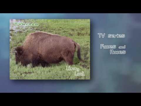 CameraTalk: Yellowstone - Bison Landscape