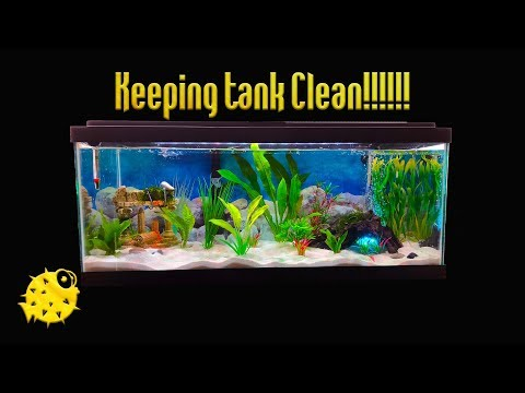 Tutorial - How To Clean White Sand In Fish Tank