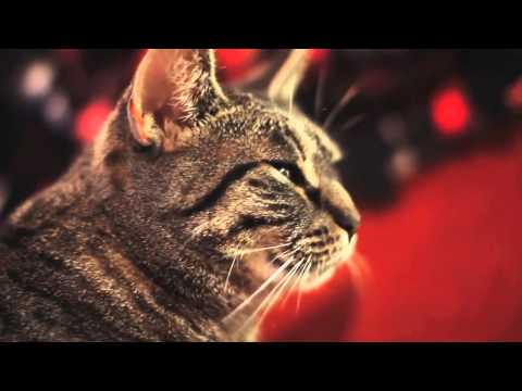 Collective Soul -- Shine (Cat Cover) !!!