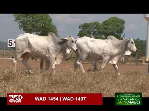 LOTE 51 - WAD 1454 | WAD 1407