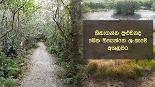 හිතාගන්න පුළුවන්ද මේක තියෙන්නේ ලංකාවේ අගනුවර - Walking Through Beddagana Wetland Park