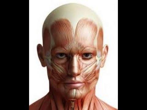 Músculos Faciales - Anatomía - YouTube