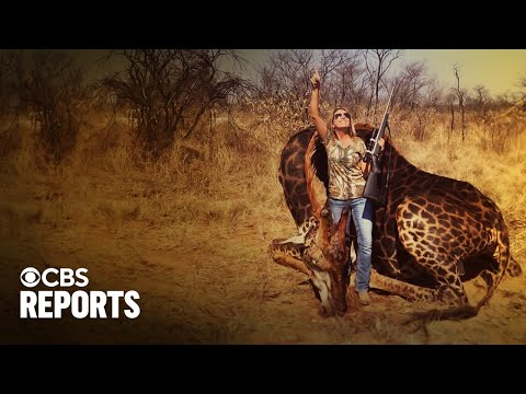 Trophy Hunting: Killing Or Conservation? | Full Documentary