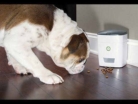 Dog Treat Dispenser >> 202726 Remote Dog Treat Dispenser Youtube