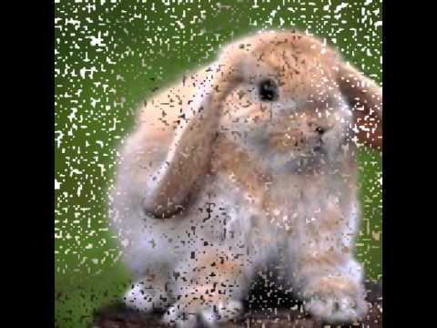 Красивые картинки природы и животных - YouTube