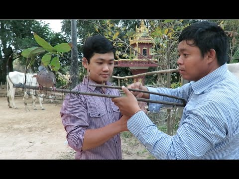 Dove Trap at Takeo Province in Cambodia