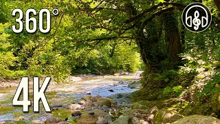 Sounds of nature. Gentle sound of a mountain river with singing of forest birds. 360 degree 4K video