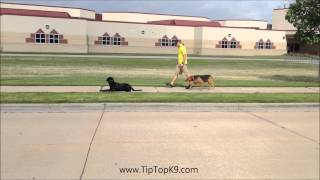 Oklahoma Dog Obedience - German Shepherd / Rottweiler