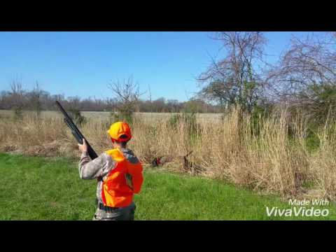 Pheasant Hunting With A Pitbull Quick Clip
