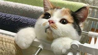 おかしい猫 - かわいい猫 - おもしろ猫動画 HD #150 https://youtu.be/-...