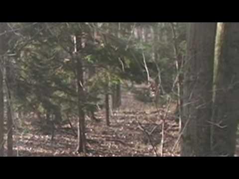 Double Deer - HD Hunting