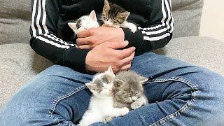 4匹の子猫の名前を決めました♪