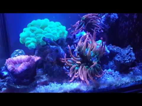 30g innovative marine update #8 new tank upgrade
