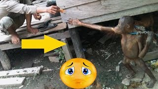 Tiny Orangutan Was Chained Under House For 5 Years,Watch His Reaction When He Is Finally Set Free