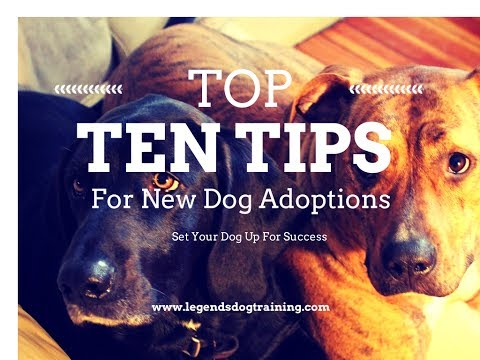 Top Ten Tips for New Dogs