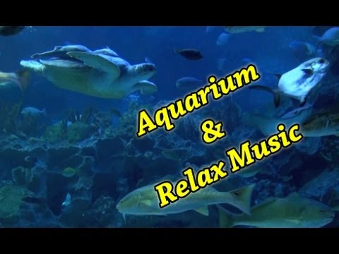 AQUARIUM 54 min Full HD & relax music