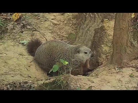 Good Luck for Woodchucks - Humane Groundhog Solutions!