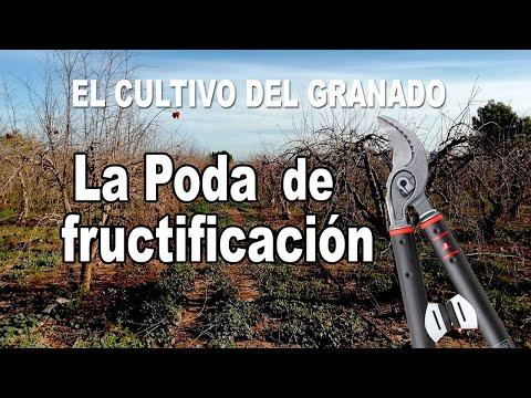El cultivo del granado - Poda de fructificación
