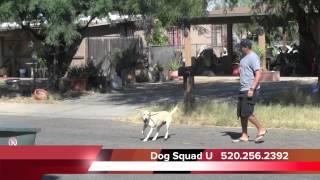 Dog Squad U (demonstration) - Dog Training In Tucson, Az